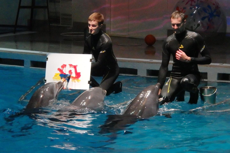 Pasirodymuose Klaipėdoje dalyvauja devyni delfinai, dar šeši, likę Graikijoje, laukia kelionės namo.<br>A.Pilaitienės nuotr.