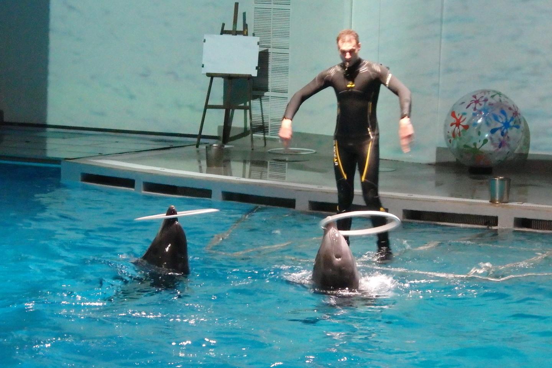 Delfinų pasirodymai – džiaugsmas ir mažiems, ir suaugusiems.<br>A.Pilaitienės nuotr.