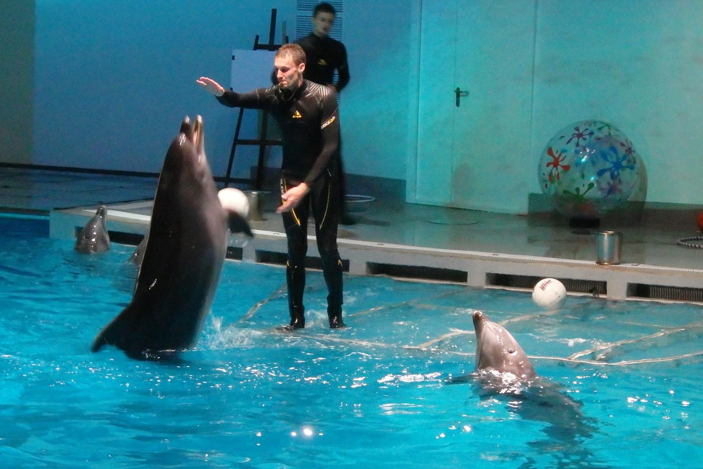 Delfinų pasirodymai – džiaugsmas ir mažiems, ir suaugusiesiems.<br>A.Pilaitienės nuotr.