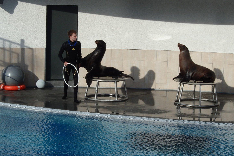 Jūrų liūtai – džiaugsmas ir mažiems, ir suaugusiesiems.<br>A.Pilaitienės nuotr.