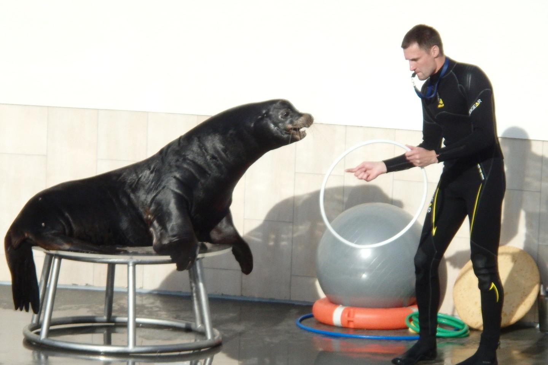 Jūrų liūtai gerai jaučiasi naujoje arenoje.<br>A.Pilaitienės nuotr.