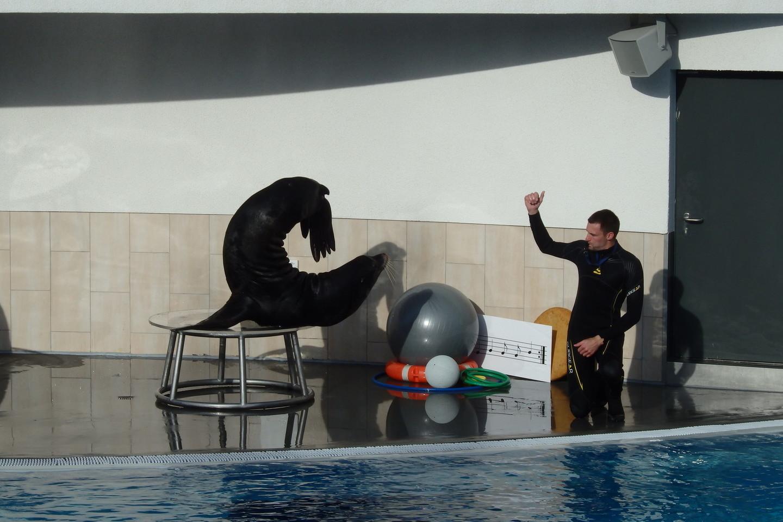 Jūrų liūtai – Saulės įlankoje.<br>A.Pilaitienės nuotr.