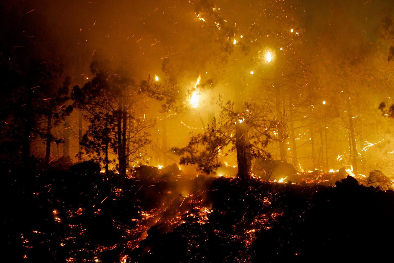 Ugnis užklupo šienpjovius, grybautojus, medkirčius.<br>Archyvo nuotr.
