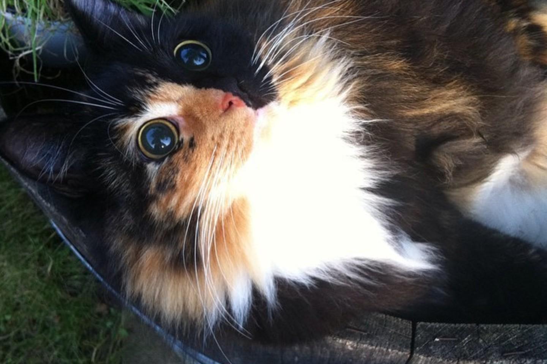 Dabar Jasmine yra mylima katė.<br>pikore.com/sandracoudray nuotr.