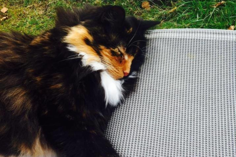 Iš pradžių ši gražuolė katė bijojo žmonių ir nesutarė su kitais gyvūnais.<br>facebook.com/Association-Adoption-Féline-Gironde nuotr.