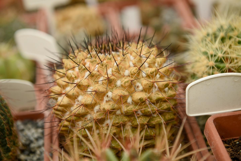Oranžerijoje laikoma didelė kaktusų kolekcija, euforbijos, alijošiai, agavos, gasterijos ir kiti augalai. Auginama paparčių kolekcija, sterlicijos, bromelijų šeimos augalai, orchidėjos. Nemažai yra ir jau nužydėjusių ar tik žiedus kraunančių augalų ir dar daugelis kitų augalų iš viso pasaulio.<br>D.Umbraso nuotr.