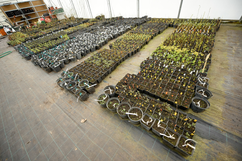 VU Botanikos sode Kairėnuose esančiame šiltnamyje veši šimtai egzotinių augalų iš viso pasaulio.<br>D.Umbraso nuotr.