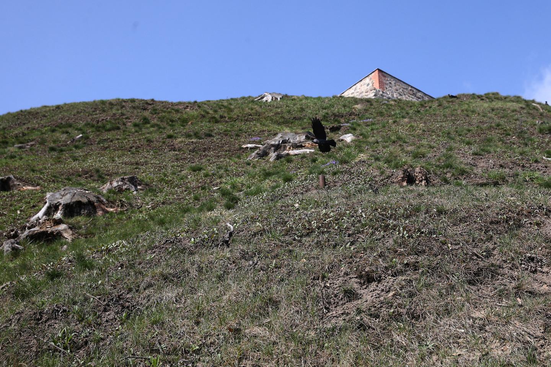 Ant kalno šlaitų liko tik kelmai.<br>R.Danisevičiaus nuotr.
