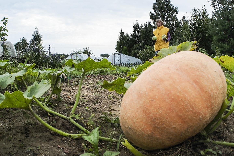 E. Katilienės ir A. Marcinkevičiaus daržovių bei gėlių auginimo ūkyje dirba 8 darbuotojai, daugiau nei pusė jų turi negalią.<br>V.Ščiavinsko nuotr.