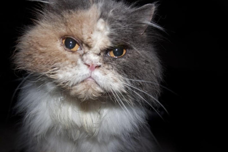 Kad ir kaip mylėtumėte savo katę, kartais jūs pasielgiate taip, kad smerkiantis jos žvilgsnis yra neišvengiamas.<br>123rf nuotr.
