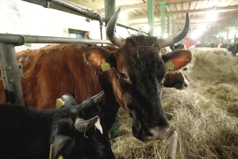 Į Seimą išrinkti ūkininkai tikino, kad nebus apleistos nei jų žemės, nei karvės.