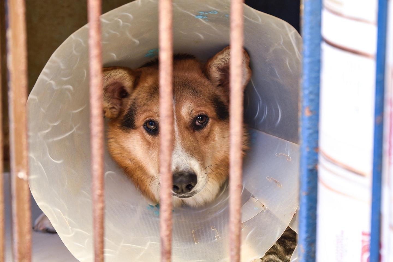 Žiaurus elgesys su gyvūnais – silpno žmogaus požymis: nepažaboja ir padidintos baudos.<br>V. Ščiavinsko nuotr.