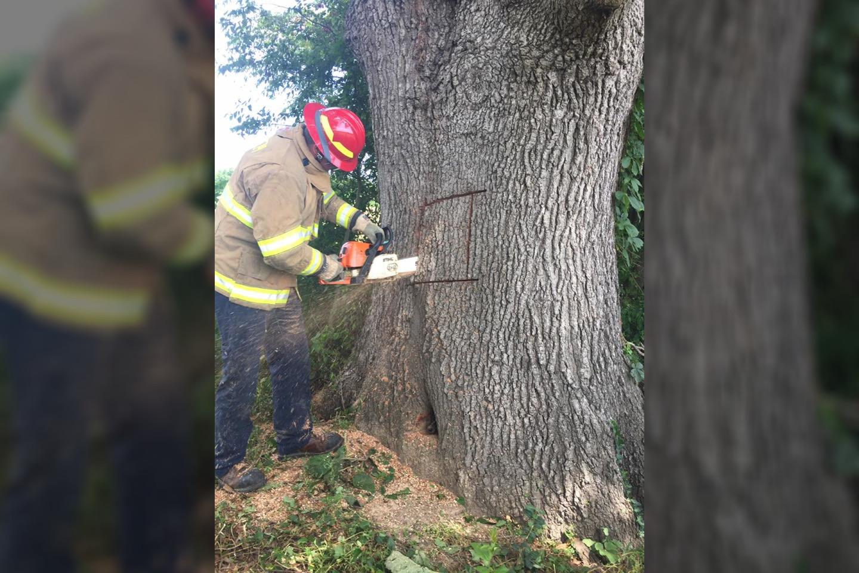 Medyje užstrigusį šunį teko vaduoti ugniagesiams.<br>Facebook.com/Kentucky-State-Police-103979825675 nuotr.