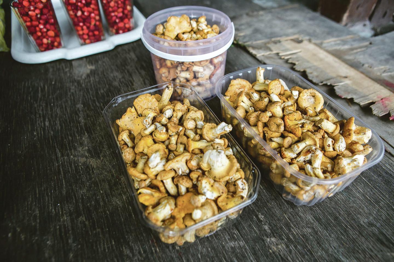 Už indelį Varėnos miškuose rastų voveraičių pardavėjai prašo 6 eurų.