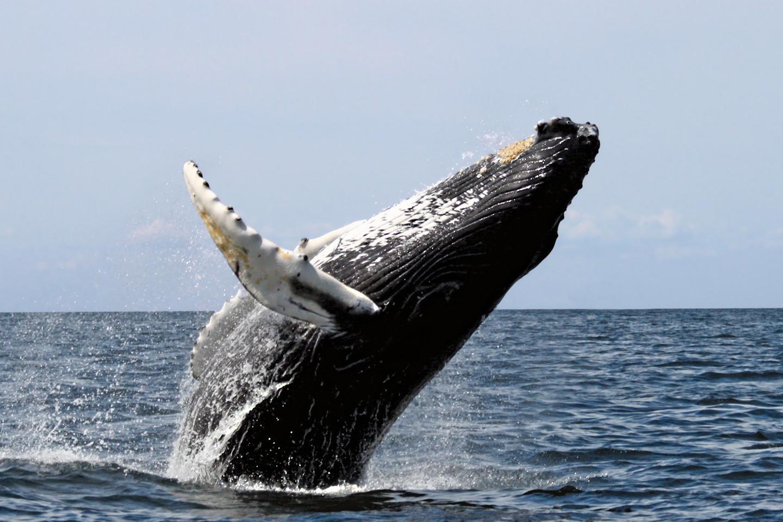 Banginio maita bus iškasta, sukapota ir išgabenta į sąvartyną.<br>Wikipedia nuotr.