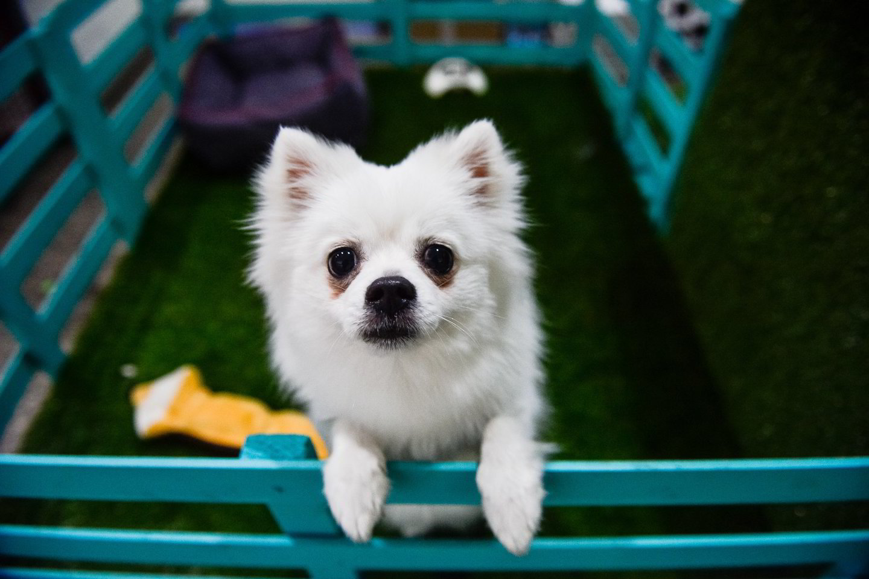 Visų pirma įvertinkite, ar jūsų augintinis gali turėti antsvorio. Neskubėkite statyti šuniuko ant svarstyklių – jų rodomi skaičiai jums gali mažai ką pasakyti.<br>J.Stacevičiaus nuotr.