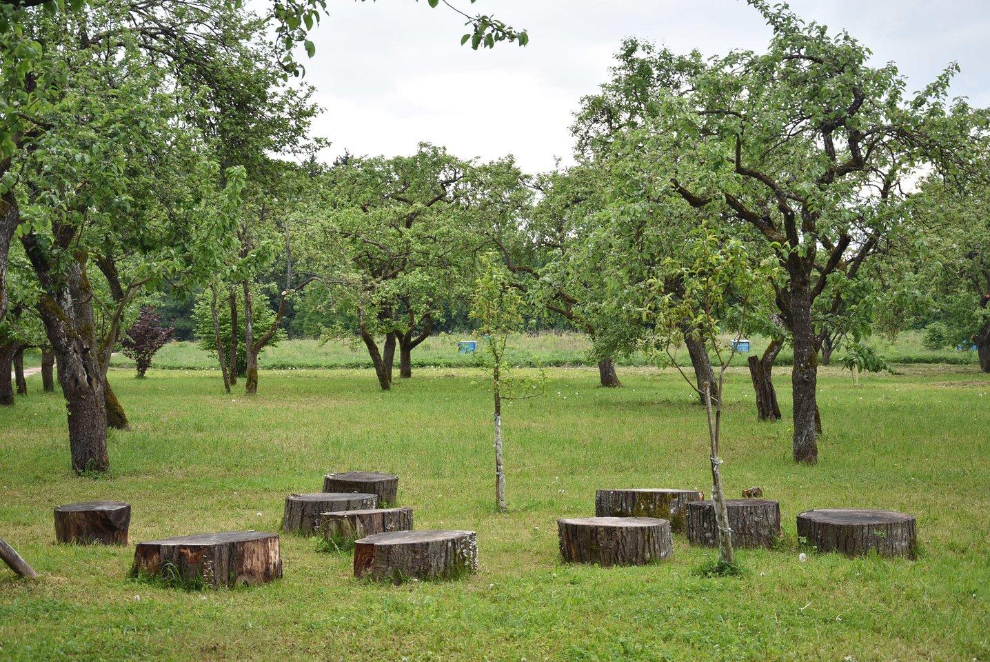 Obelynės parko senasis sodas.<br>A.Srėbalienės nuotr.