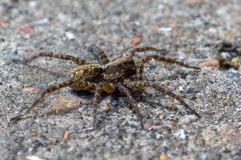 Daug kas vorų bijo, bet verčiau jų nežudyti.<br>V.Ščiavinsko nuotr.