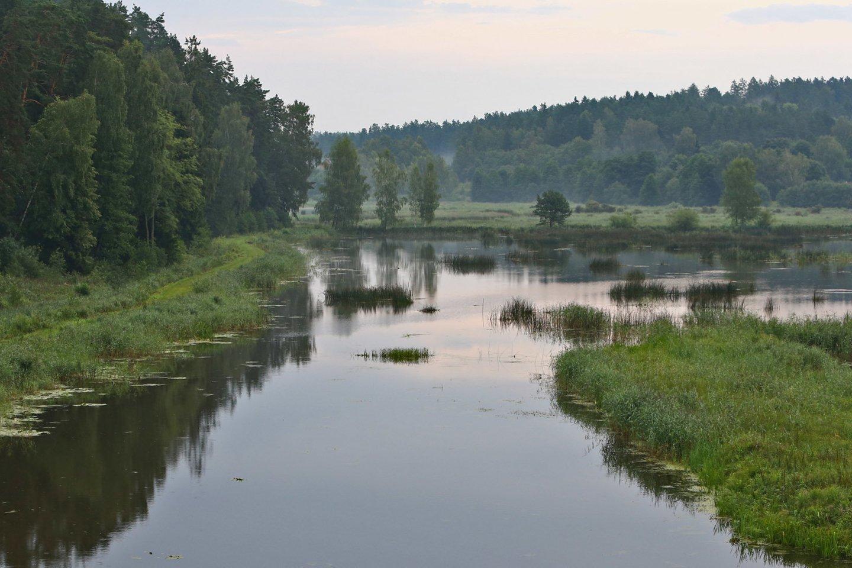 Apuokai mėgsta apsigyventi pamiškėse, greta vandens telkinių, kur gausu maisto.<br>G.Šiupario nuotr.