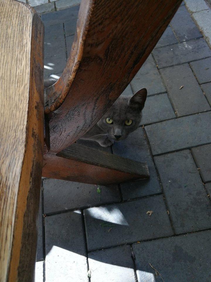"""Vilkyčiai, baras """"Sotus vilkas"""".<br>Nuotr. iš """"Riebus katinas""""."""