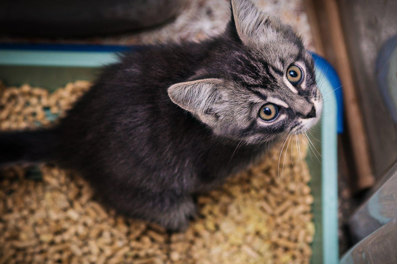 Jei naudojamas kokybiškas ir katei patinkantis kraikas, savo dėžute katė naudojasi noriai ir nekelia problemų.<br>123rf.com nuotr.