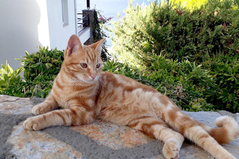 Katė.<br>Scanpix nuotr.