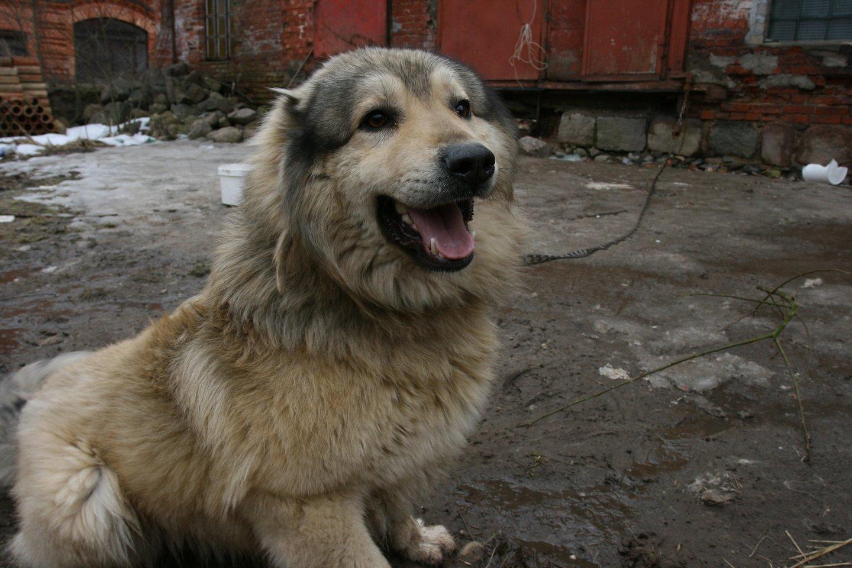 Už ilgesnį nei 10 minučių lojimą šuns šeimininkui grės bauda iki 300 eurų.