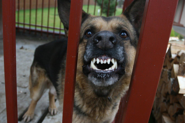 Panevėžio r. šuo apkandžiojo 9-metę.<br>M.Patašiaus asociatyvi nuotr.