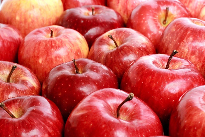 Šie metai džiugina itin gausiu obuolių derliumi.<br>123rf nuotr.