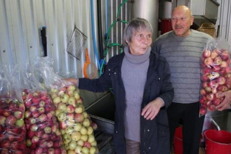 """Ponia Galina iš obuolių spaudžia sultis. Maišo obuolius su svarainiais. """"Obuoliai užaugo patys. Man sunkiausias darbas juos surinkti. Visa kita spaudykloje mašinos padaro – aš tik pasiimu maišelius gardžių sulčių"""", – sakė Klaipėdos rajono gyventoja, obuolius auginanti """"Aisės"""" sodų bendrijoje.<br>E.Jankausko nuotr."""