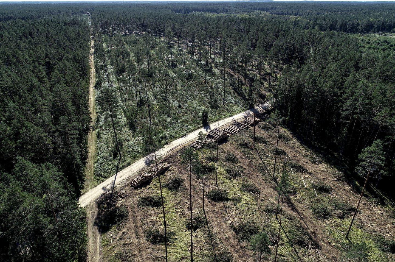 Mėnuo, per kurį buvo sustabdyti kirtimai Labanoro regioniniame parke, baigėsi.<br>V.Ščiavinsko nuotr.
