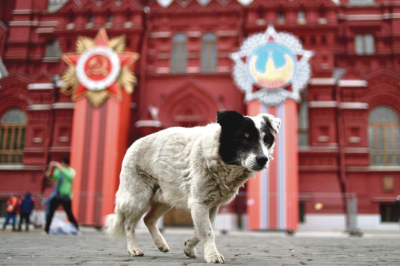 """Maskvoje kasmet 15–20 tūkst. kartų valkataujantys šunys užpuola žmones.<br>""""Reuters""""/""""Scanpix"""" nuotr."""