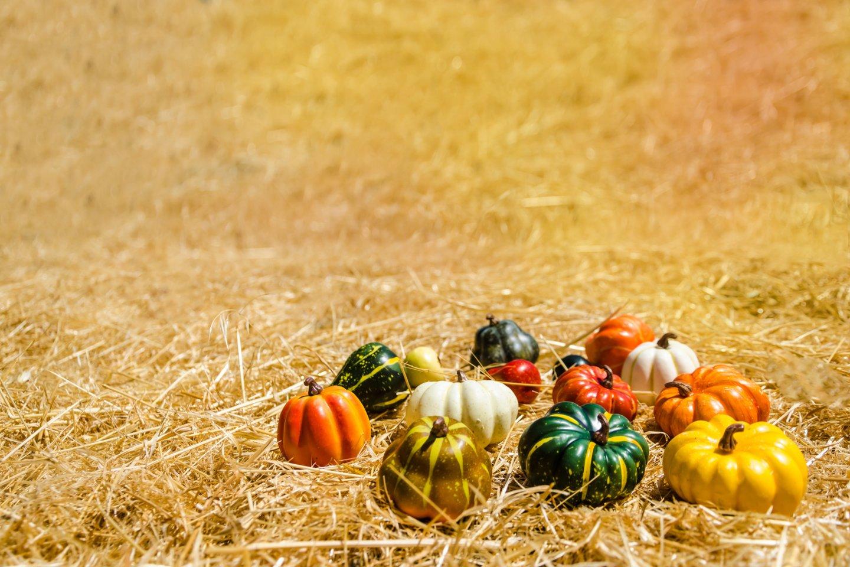 Dėl storos luobelės patisonai gali išsilaikyti visą žiemą, o jų sudėtyje yra organizmui būtinų maistinių medžiagų.<br>123rf nuotr.