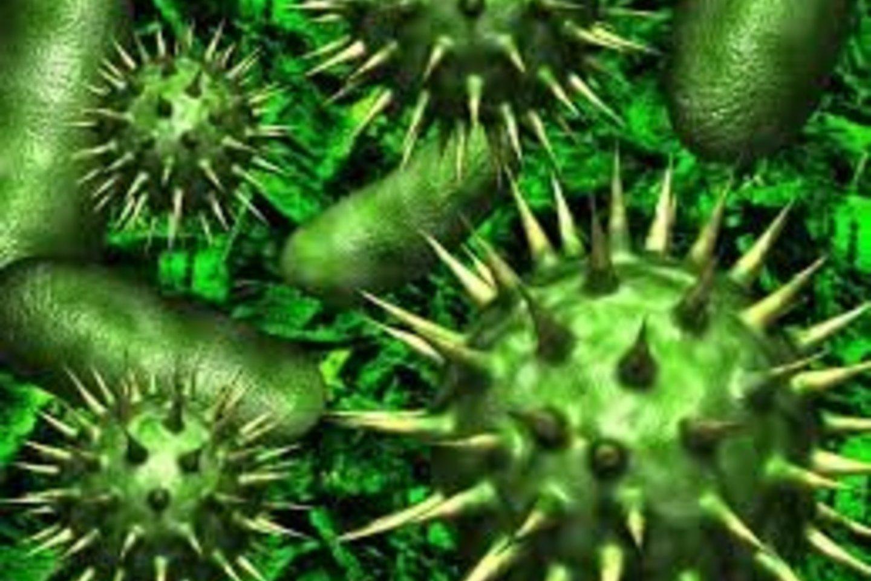 Burnos ertmė, jos gleivinė, dantys, jų paviršius, dantenos yra puikiausia vieta gyventi ir daugintis įvairiausiems mikroorganizmams.<br>NVSPL nuotr.