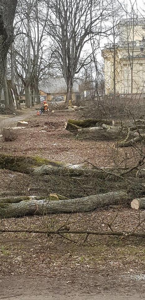Trakų Vokės dvaro parko tvarkymas.
