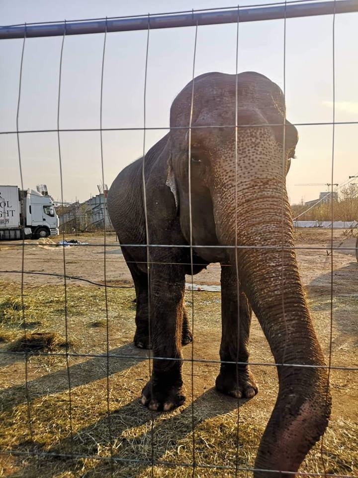 Gyvai pamačius gyvą dramblį moteris apsiverkė.<br>Skaitytojos nuotr.