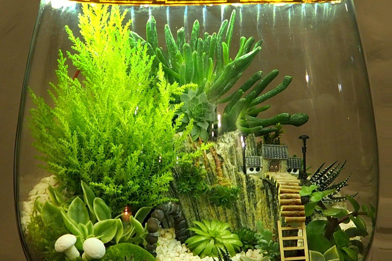 Florariumas – gyvų augalų kompozicija stikliniame inde, kartais vaizdžiai pavadinama kambariniu šiltnamiu.<br>M. Azulevičiūtės nuotr.