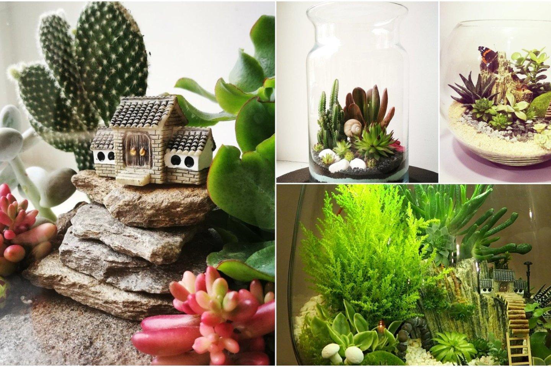 Florariumas – gyvų augalų kompozicija stikliniame inde, kartais vaizdžiai pavadinama kambariniu šiltnamiu.