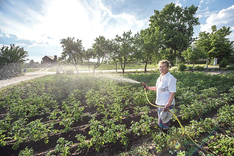 Matuiziškė R.Šiškevičienė pati stebėjosi – kur matyta, kad kas bulves laistytų. Tačiau kitaip jos neužderės.<br>D. Umbraso nuotr.