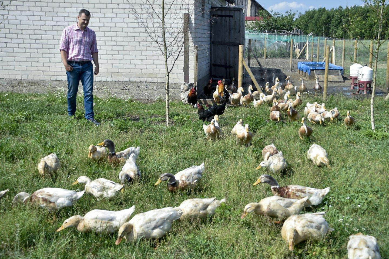 Savo paukščių ūkį politikas G.Paluckas plėtoja daugiau kaip prieš dvejus metus įsigytoje sodyboje Varėnos rajone.<br>V.Ščiavinsko nuotr.
