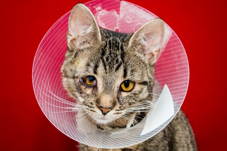 Šiandien veterinarė L. Zorgevica-Pockeviča įsitikinusi, kad skiepijant jos katę kitokios sudėties vakcinomis, fibrosarkomos riziką galima buvo sumažinti, ir siekia, kad kuo mažiau šeimininkų susidurtų su kačių povakcinacine fibrosarkoma.<br>123rf nuotr.