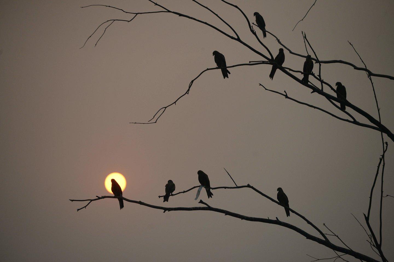 Nors šviesa ir tamsa yra vienas svarbiausių reiškinių tiek žmonių, tiek gyvūnų gyvenime, kartais pasitaiko ir kitokių reiškinių–pavyzdžiui, Saulės ar Mėnulio užtemimų.<br>AFP / Scanpix nuotr.