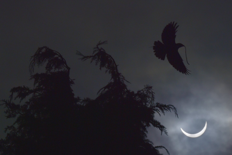 Žuvys ir paukščiai, kurie būna aktyvūs dieną, grįžta į savo naktinius guolius, o naktiniai gyvūnai – pavyzdžiui, šikšnosparniai – atgyja nuo staiga užėjusios tamsos.<br>Reuters / Scanpix nuotr.