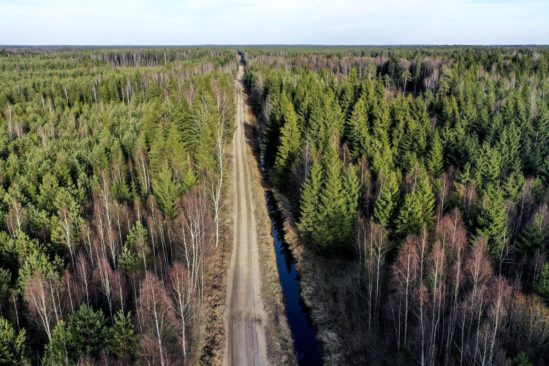 Rūdninkų miškai,kirtimai,miškas,pavasaris,orai<br>V.Ščiavinsko nuotr.