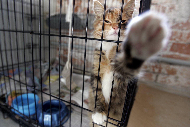 Dukart teistam vyrui atlygis už kačiukų paskandinimą – 10 eurų.<br>V.Balkūno asociatyvi nuotr.