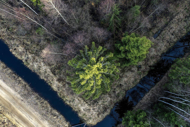 Seimas pirmą kartą pasipriešino prezidento Gitano Nausėdos veto – parlamentarai ketvirtadienį nepritarė šalies vadovo siūlymui atsisakyti pataisų dėl miško žemės įsigijimų ribojimo.<br>V.Ščiavinsko nuotr.