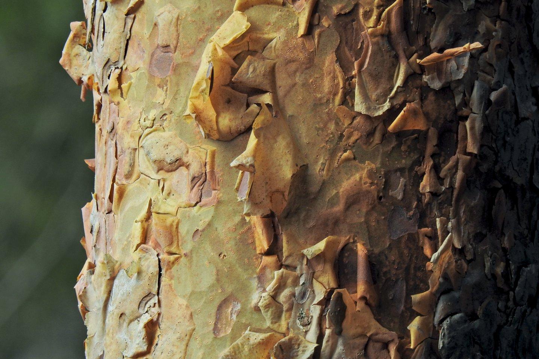 Nuo rugsėjo 2 d. bus renkamos paraiškos miško veisimo finansavimui.<br>V.Ščiavinsko nuotr.