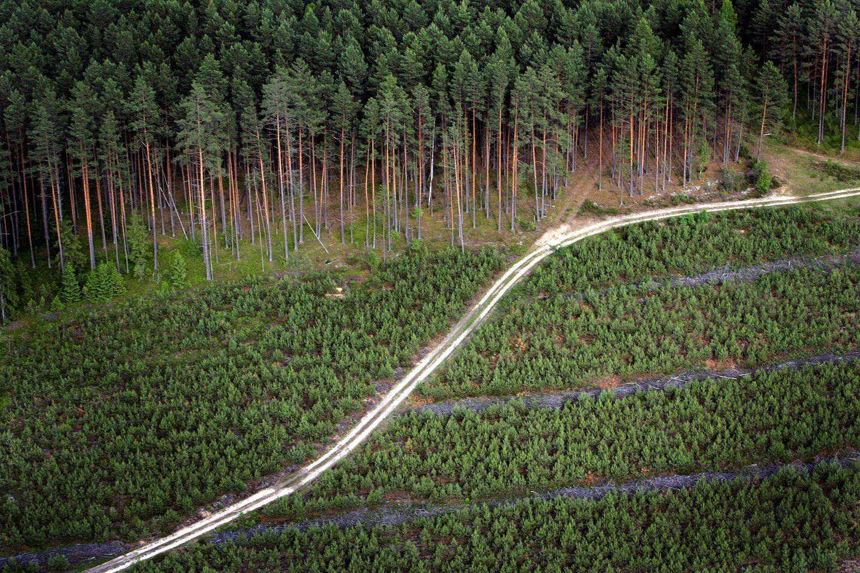 Nuo pirmadienio renkamos paraiškos miško veisimo finansavimui.<br>V.Balkūno nuotr.