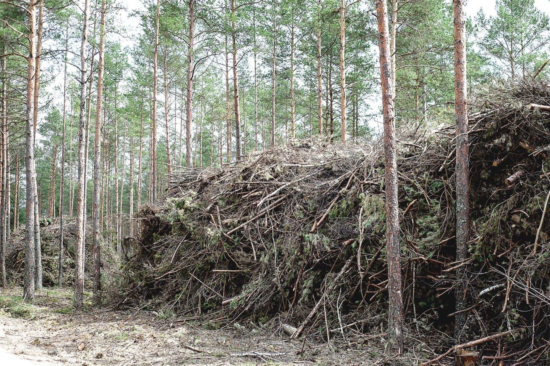 Jau netrukus šilumą gaminančios bendrovės įjungs savo įrenginius, o šildymas turėtų bent šiek tiek atpigti. Mat biokuro kainos pastaraisiais mėnesiais patraukė žemyn dėl didėjančio importo iš Baltarusijos.<br>V.Ščiavinsko nuotr.