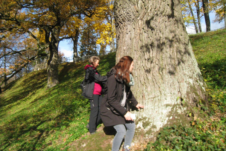 Iš senosios ąžuolų giraitės liko tik keturi medžiai.<br>M.Augulytės nuotr.